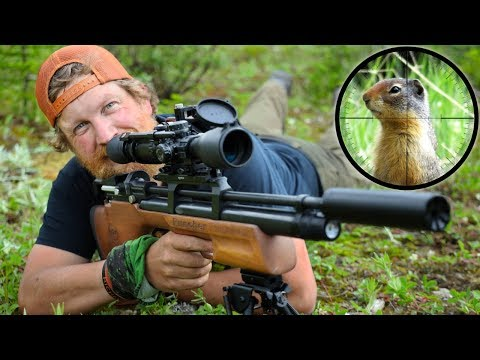 Air Rifle Hunting Ground Squirrels Catch & Cook Day 12 Of 30 Day Survival Challenge Canadian Rockies