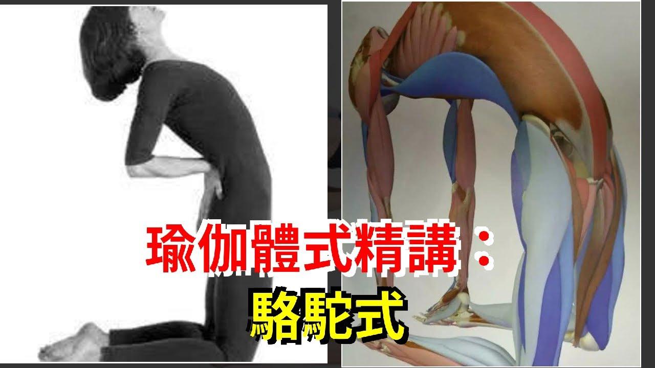 瑜伽體式精講:駱駝式 - YouTube