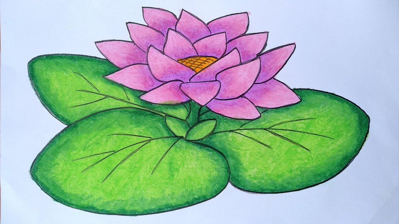 Cara Menggambar Bunga Teratai Menggambar Bunga Yang Mudah Dan Simpel Youtube