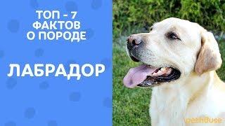 ЛАБРАДОРЫ топ-7 фактов о породе | Собака ест носки и ищет наркотики? | Все о породе от Pethouse.ua