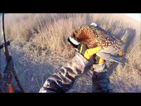2016 Nebraska wild bird hunt