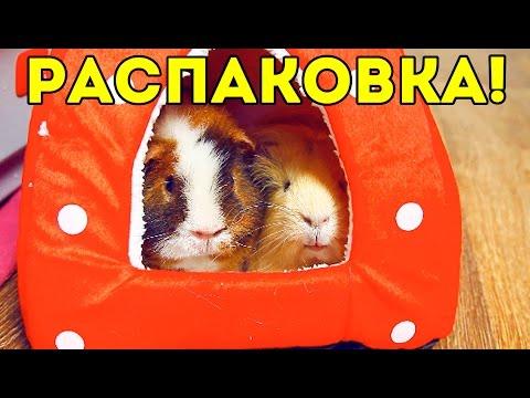 РАСПАКОВКА посылки: Домик Клубничка с AliExpress / SvinkiShow