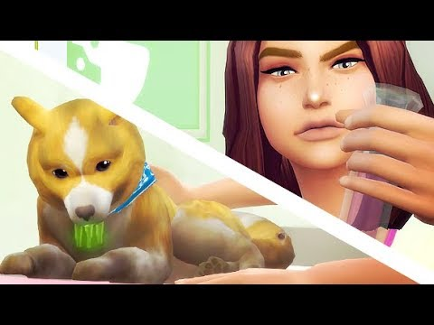 VET EMERGENCY! | THE SIMS 4 // CATS AND DOGS — PART 8