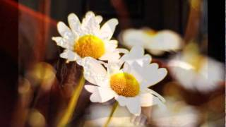 Cassandra Wilson - Heaven Knows