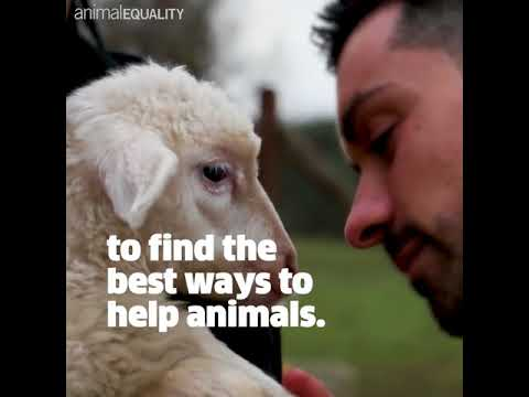 Animal Equality and Effective Altruism