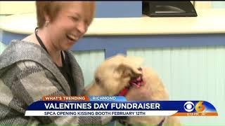 Richmond SPCA kissing booth returns Valentine's week