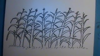 How to Draw a Cornfield