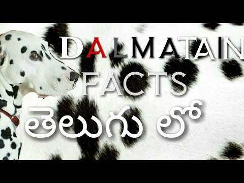 Dalmatian dog facts in telugu ll popular breed ll