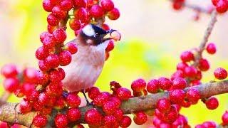 Wild birds looking for food in nature