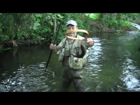 pesca-de-trucha-a-mosca-seca