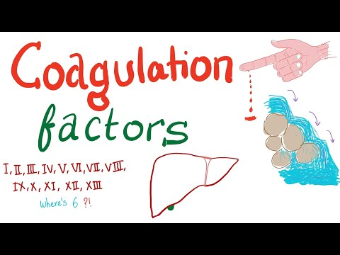 Coagulation Factors | Hemostasis | Hematology