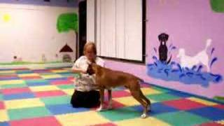#3 Dallas Tail Up Learning With Handler Kneeling