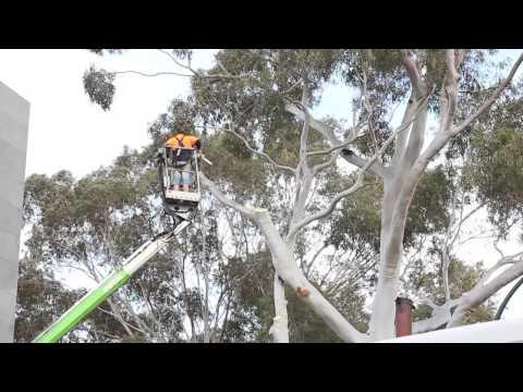 Tree Pruning Melbourne - The DIY Myth