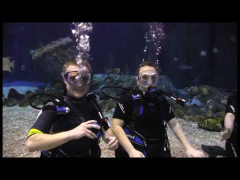 ADI Dives | Epcot Dive Quest March 11th, 2017