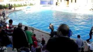wypadek z dzieckiem na pokazie delfinw egipt