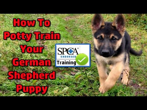 German Shepherd Puppy - How To Potty Train ►START TODAY◄ German Shepherd Potty Training Tips :)