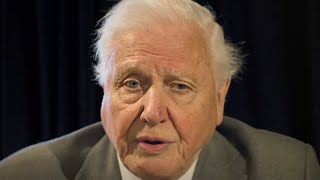 video: Watch: David Attenborough asks G7 to tackle climate change with same urgency as vaccine development