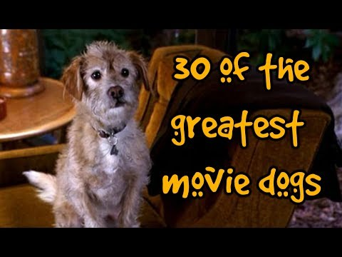 30 Of The Greatest Movie Dogs