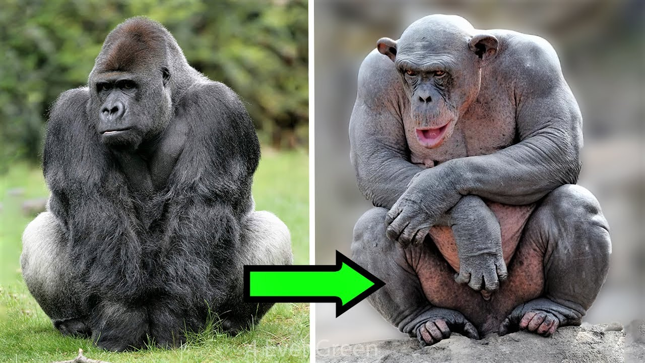 14 Animals You Won't Recognize Without Hair