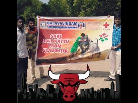 Kalasalingam University Students Support Jallikattu | கலசலிங்கம் பல்கலைக்கழகம்