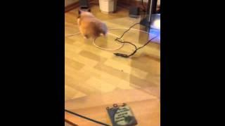 Hamster total verrückt :)
