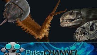 TOP 10 Fósiles Vivientes || Animales Prehistóricos en la A...