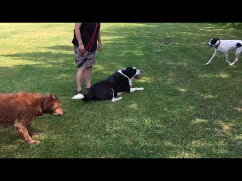 Dogs at Jackie Parker Park