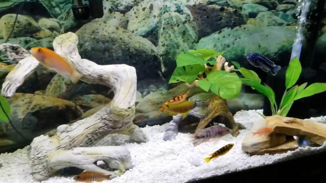 New African Cichlid Fish Tank Aquarium