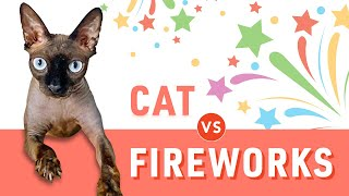 SPHYNX CAT VS FIREWORKS   4th of JULY 2020