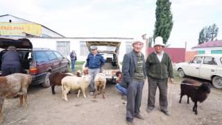 The beauty of Central Asia Kyrgyzstan (中亚五国之一 吉尔吉斯斯坦)