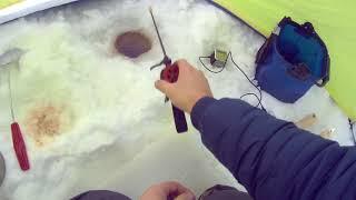 Глушимо рибу низькими частотами .Від звуку мене мало не знудило.Експеримент на риболовлі взимку.