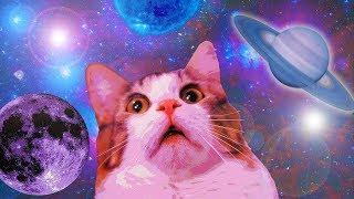 11 MIN OF DANK CAT MEMES