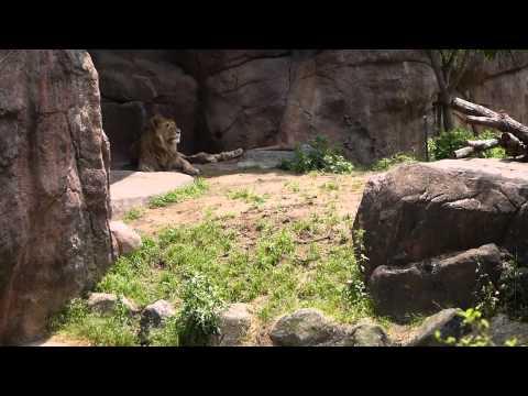 [大阪遊 Osaka Trip] 天王寺動物園 Tennōji Zoo