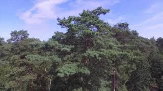 Herkenbosch Trail (NP de Meinweg)