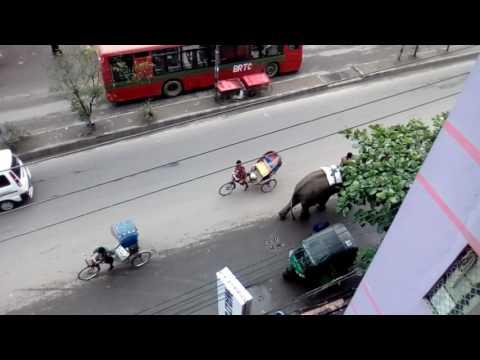 From my office at Priyo Dhaka