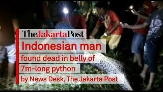 Indonesian man found dead in belly of 7m-long python