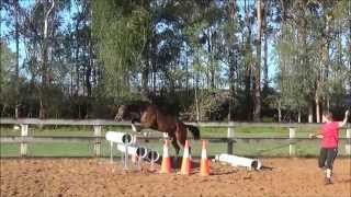 3yo filly by GT Jake Jazz from Ardour Argentinus lunge over jumps