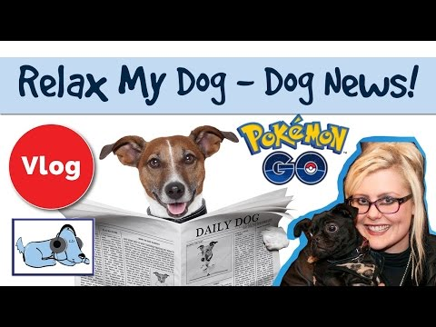 pokémon-go-rescue-story,-robot-dogs---the-best-dog-news-stories-of-the-week!