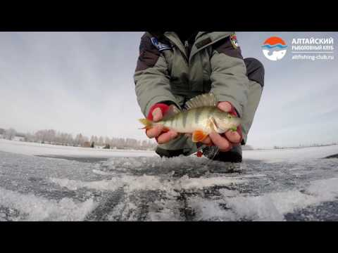 ловля окуня на оби видео