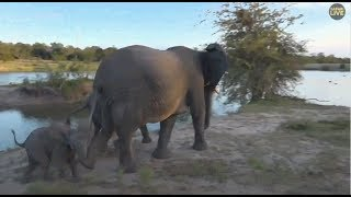 Safari Live : Elephants at the dam with a tiny calf this afternoon with Steve  March 18, 2018