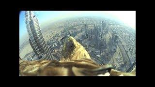 Los Vídeos más Raros del Mundo 73 / Videos Virales Sorprendentes