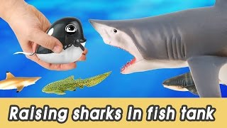[EN] #66 Let's raise sharks in my fish tank! kids education, marine animals animationㅣCoCosToy