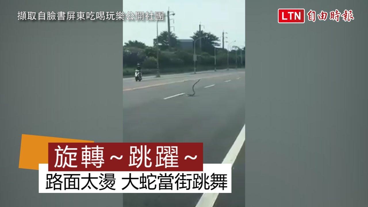 驚嚇! 屏東路面太燙 大蛇全身扭動在馬路上跳舞(取自臉書屏東吃喝玩樂公開社團)