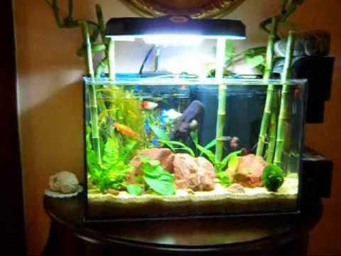 Acquario 20 litri tropicale youtube for Vaschetta pesci rossi offerte