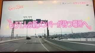 花のち晴れ 愛莉役 今田美桜 福岡時代テレビ初登場シーン