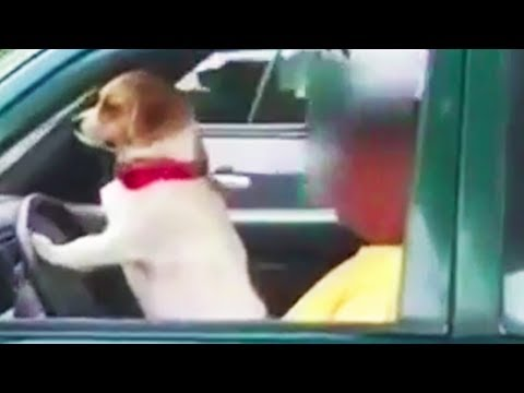 Funny Dogs 😂 Funny Dogs Playing and Barking [Funny Pets]