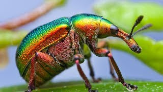 Fascinants Insectes (3/3) - Documentaire Animalier HD