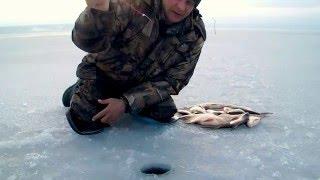 Зимняя ловля подлещика/леща на Печенежском водохранилище. Ветерок.