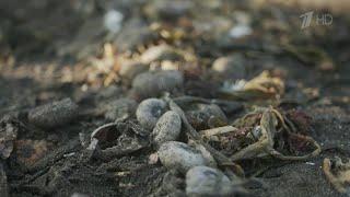 В Москву отправлены пробы песка и воды с Камчатки, где произошло масштабное загрязнение.