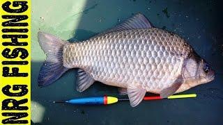 Рыбалка на ОГРОМНОГО КАРАСЯ!!! который крутит удочку в бублик